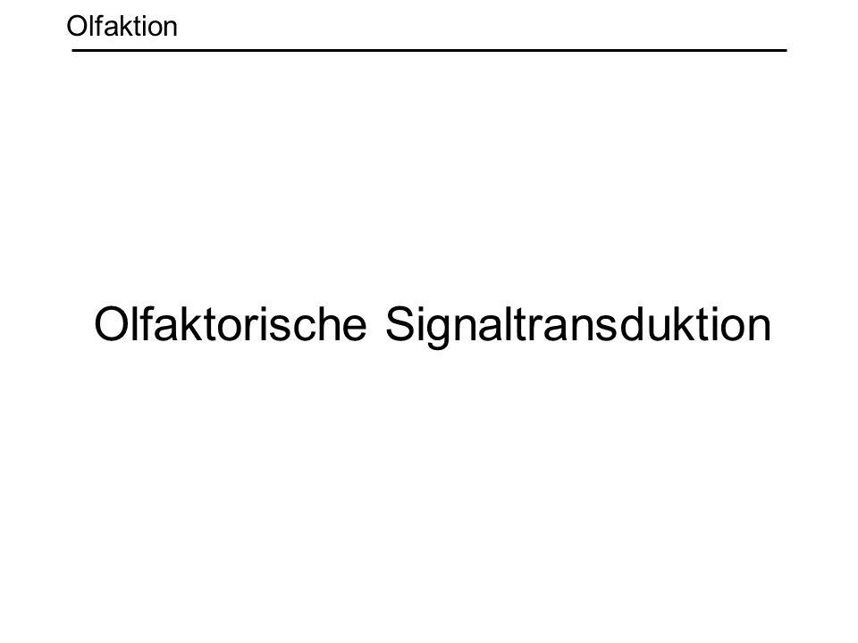 Olfaktorische Signaltransduktion Olfaktion