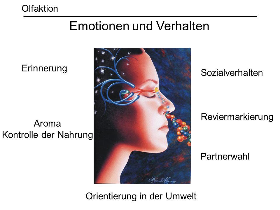 Emotionen und Verhalten Erinnerung Orientierung in der Umwelt Aroma Kontrolle der Nahrung Reviermarkierung Sozialverhalten Partnerwahl