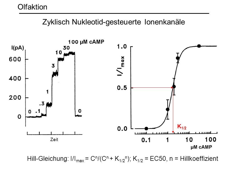 Zyklisch Nukleotid-gesteuerte Ionenkanäle Olfaktion Hill-Gleichung: I/I max = C n /(C n + K 1/2 n ); K 1/2 = EC50, n = Hillkoeffizient K 1/2 Zeit