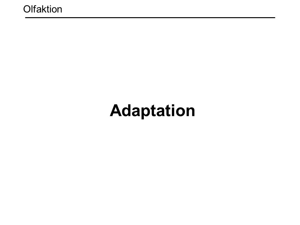 Adaptation Olfaktion