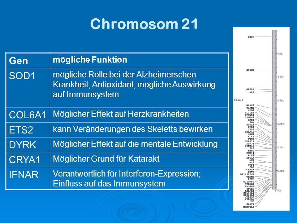 Chromosom 21 Gen mögliche Funktion SOD1 mögliche Rolle bei der Alzheimerschen Krankheit, Antioxidant, mögliche Auswirkung auf Immunsystem COL6A1 Möglicher Effekt auf Herzkrankheiten ETS2 kann Veränderungen des Skeletts bewirken DYRK Möglicher Effekt auf die mentale Entwicklung CRYA1 Möglicher Grund für Katarakt IFNAR Verantwortlich für Interferon-Expression; Einfluss auf das Immunsystem