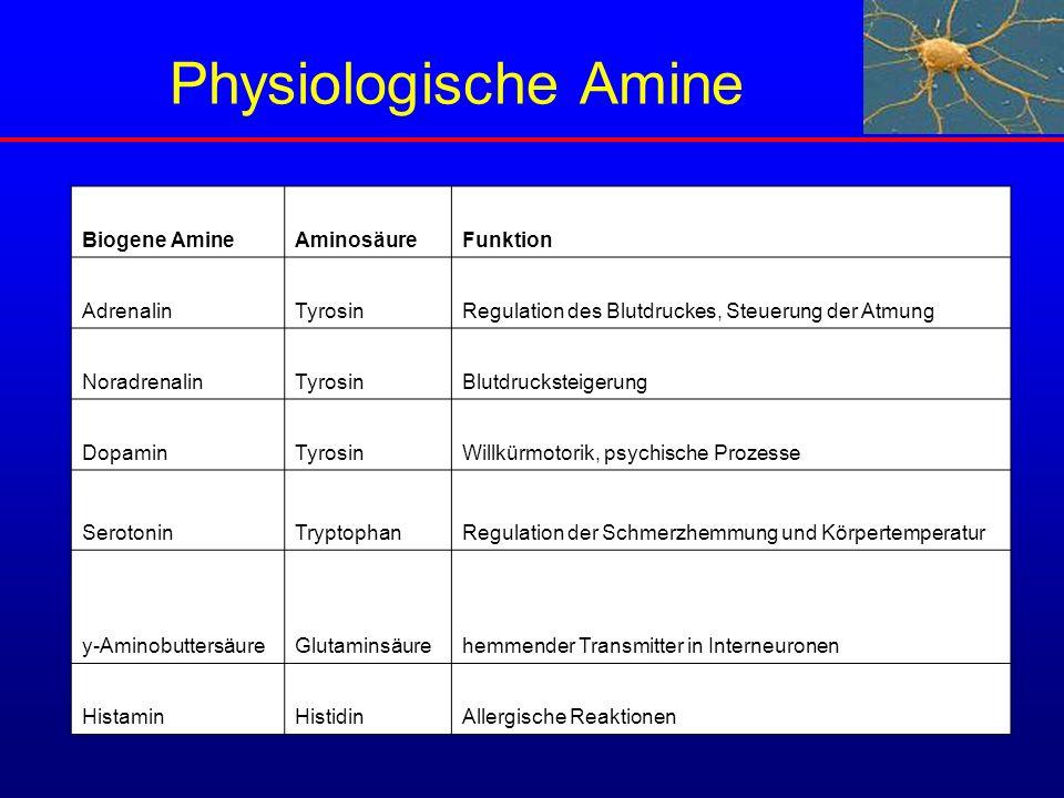 Physiologische Amine Biogene AmineAminosäureFunktion AdrenalinTyrosinRegulation des Blutdruckes, Steuerung der Atmung NoradrenalinTyrosinBlutdruckstei