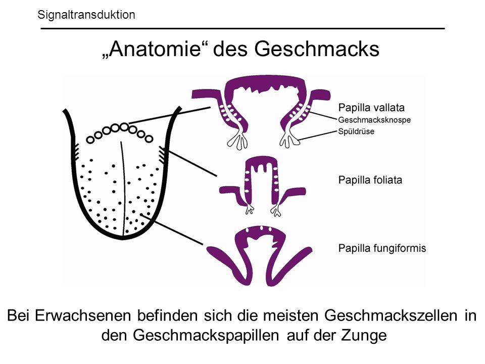 Signaltransduktion Anatomie des Geschmacks Bei Erwachsenen befinden sich die meisten Geschmackszellen in den Geschmackspapillen auf der Zunge