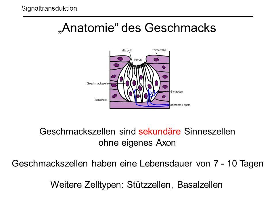 Signaltransduktion Anatomie des Geschmacks Geschmackszellen sind sekundäre Sinneszellen ohne eigenes Axon Geschmackszellen haben eine Lebensdauer von 7 - 10 Tagen Weitere Zelltypen: Stützzellen, Basalzellen