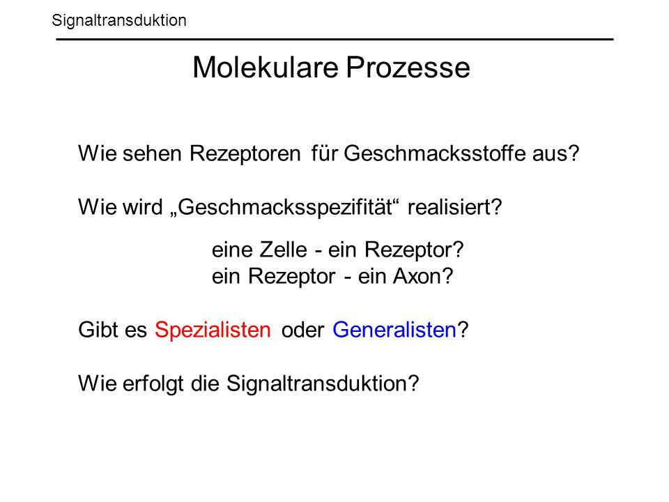 Signaltransduktion Molekulare Prozesse Wie sehen Rezeptoren für Geschmacksstoffe aus.