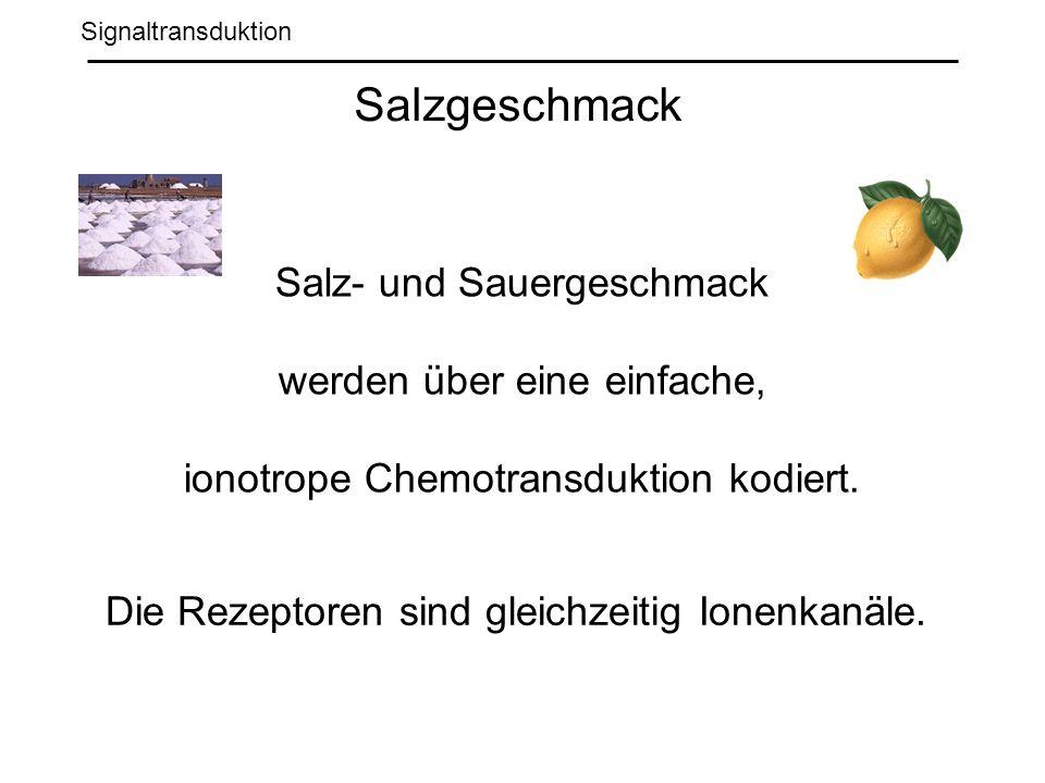 Signaltransduktion Salzgeschmack Salz- und Sauergeschmack werden über eine einfache, ionotrope Chemotransduktion kodiert.