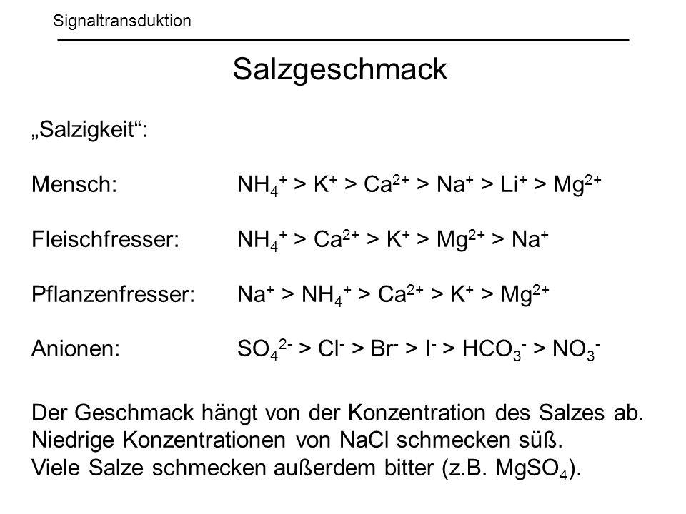 Signaltransduktion Salzgeschmack Salzigkeit: Mensch: NH 4 + > K + > Ca 2+ > Na + > Li + > Mg 2+ Fleischfresser: NH 4 + > Ca 2+ > K + > Mg 2+ > Na + Pflanzenfresser: Na + > NH 4 + > Ca 2+ > K + > Mg 2+ Anionen: SO 4 2- > Cl - > Br - > I - > HCO 3 - > NO 3 - Der Geschmack hängt von der Konzentration des Salzes ab.
