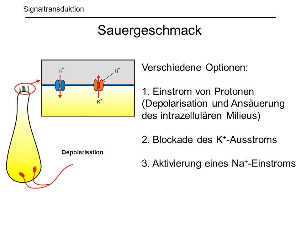 Signaltransduktion Sauergeschmack Depolarisation Verschiedene Optionen: 1.