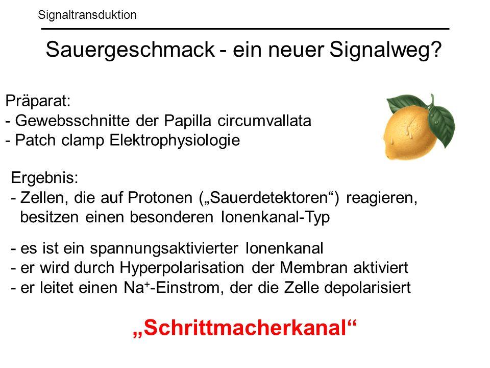 Signaltransduktion Sauergeschmack - ein neuer Signalweg.