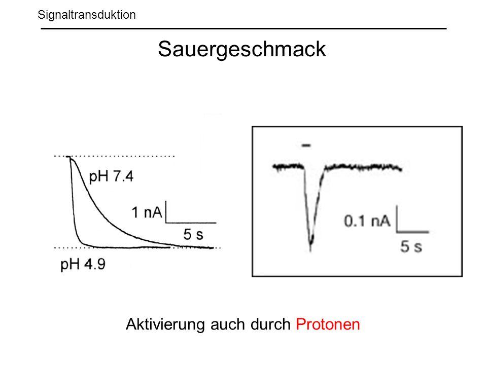 Signaltransduktion Sauergeschmack Aktivierung auch durch Protonen