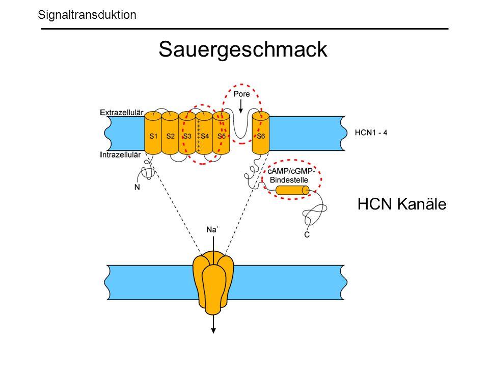 Signaltransduktion Sauergeschmack HCN Kanäle