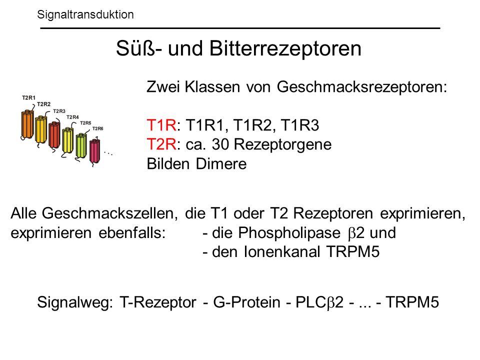 Signaltransduktion Süß- und Bitterrezeptoren Zwei Klassen von Geschmacksrezeptoren: T1R: T1R1, T1R2, T1R3 T2R: ca.