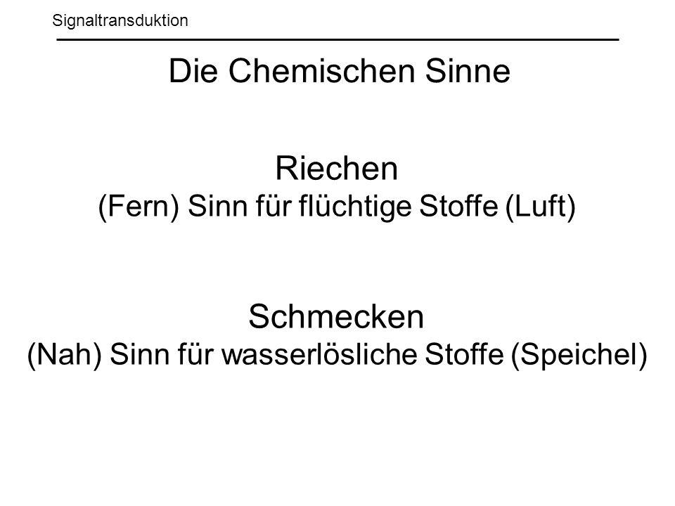 Signaltransduktion Die Chemischen Sinne Riechen (Fern) Sinn für flüchtige Stoffe (Luft) Schmecken (Nah) Sinn für wasserlösliche Stoffe (Speichel)