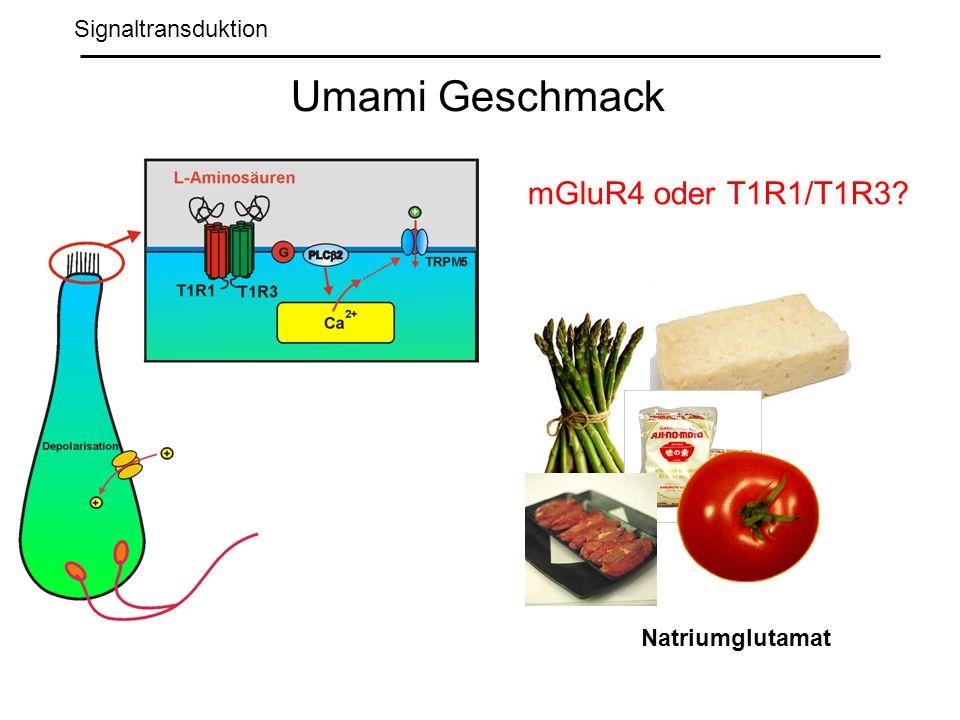 Signaltransduktion Umami Geschmack Natriumglutamat mGluR4 oder T1R1/T1R3?