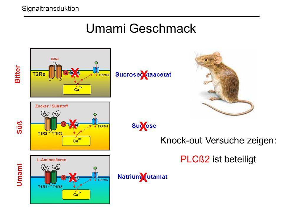 Signaltransduktion Umami Geschmack Sucroseoctaacetat Sucrose Natriumglutamat Bitter Süß Umami X X X X X X Knock-out Versuche zeigen: PLCß2 ist beteiligt
