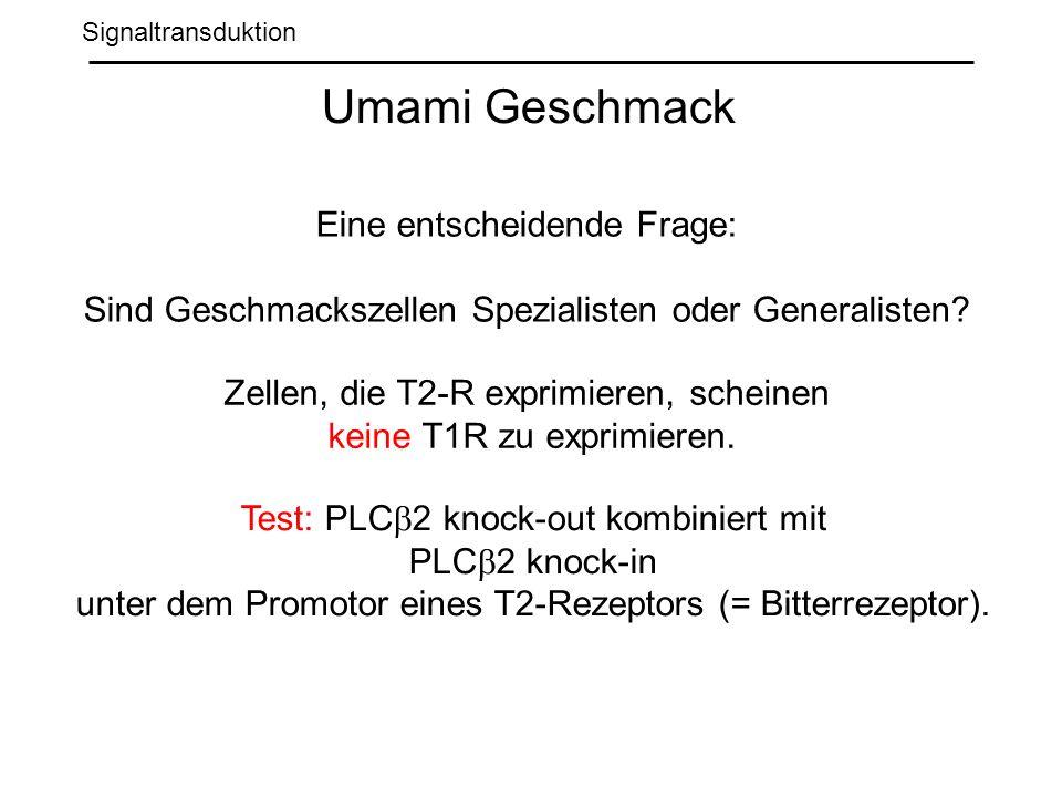 Signaltransduktion Umami Geschmack Eine entscheidende Frage: Sind Geschmackszellen Spezialisten oder Generalisten.