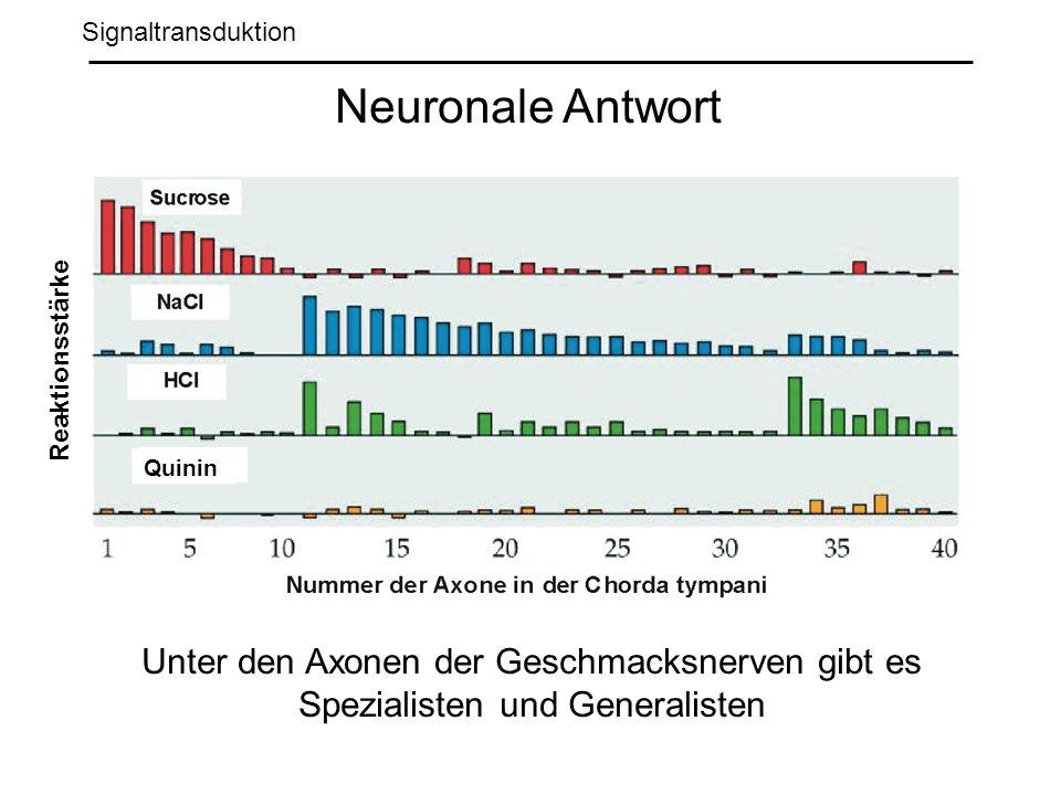 Signaltransduktion Neuronale Antwort Unter den Axonen der Geschmacksnerven gibt es Spezialisten und Generalisten Reaktionsstärke Quinin