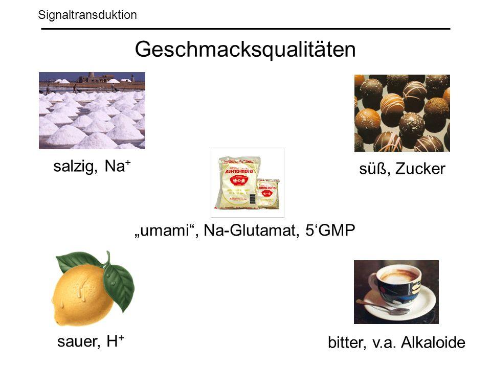 Signaltransduktion Geschmacksqualitäten salzig, Na + sauer, H + süß, Zucker bitter, v.a.