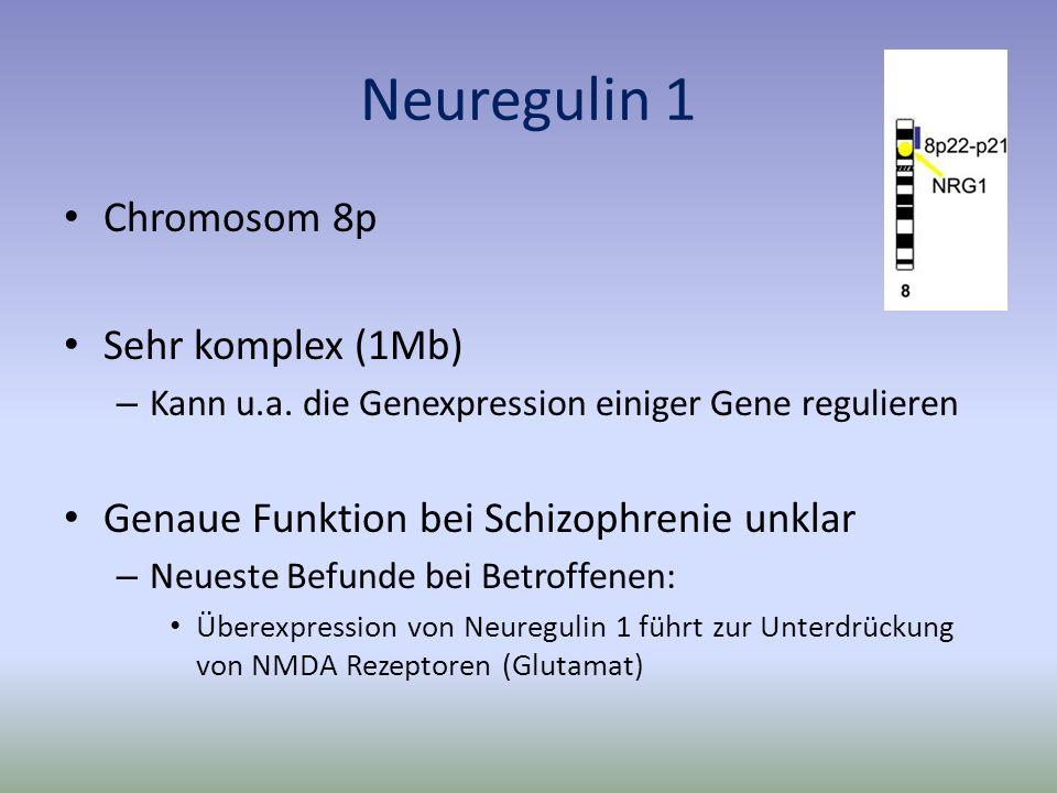 Neuregulin 1 Chromosom 8p Sehr komplex (1Mb) – Kann u.a.