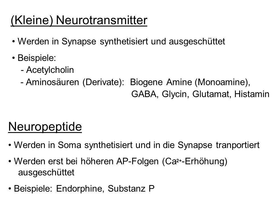 (Kleine) Neurotransmitter - Acetylcholin - Aminosäuren (Derivate): Biogene Amine (Monoamine), GABA, Glycin, Glutamat, Histamin Neuropeptide Werden in