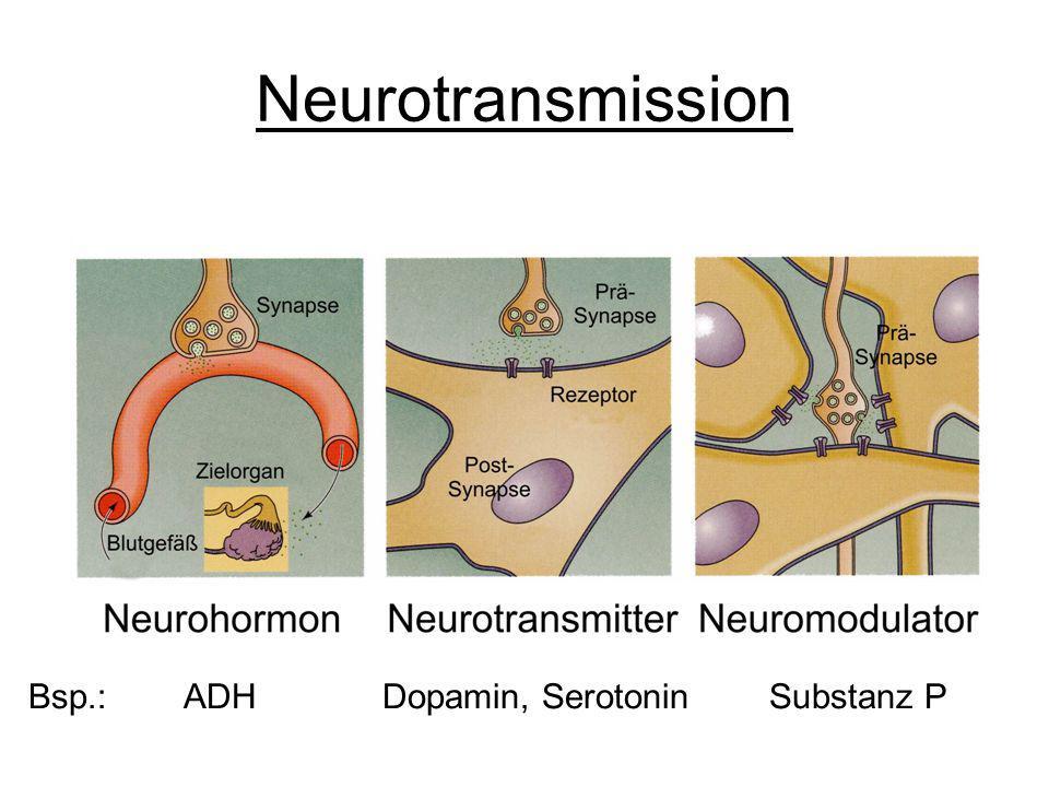 Neurotransmission Bsp.: ADH Dopamin, Serotonin Substanz P