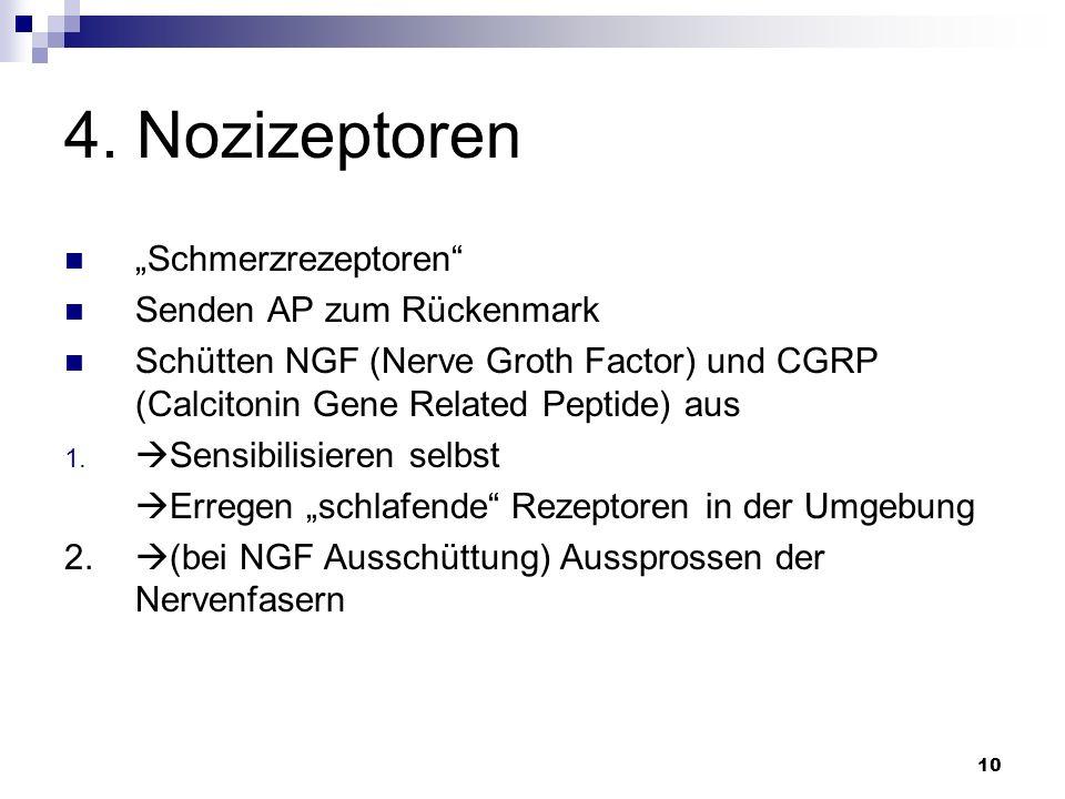 10 4. Nozizeptoren Schmerzrezeptoren Senden AP zum Rückenmark Schütten NGF (Nerve Groth Factor) und CGRP (Calcitonin Gene Related Peptide) aus 1. Sens