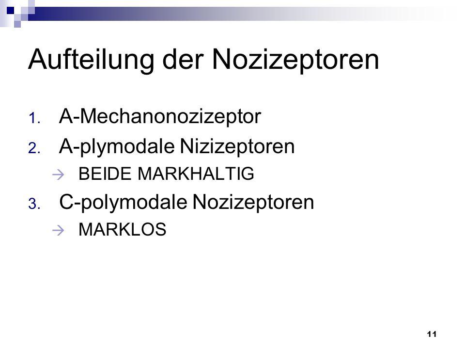 11 Aufteilung der Nozizeptoren 1. A-Mechanonozizeptor 2. A-plymodale Nizizeptoren BEIDE MARKHALTIG 3. C-polymodale Nozizeptoren MARKLOS