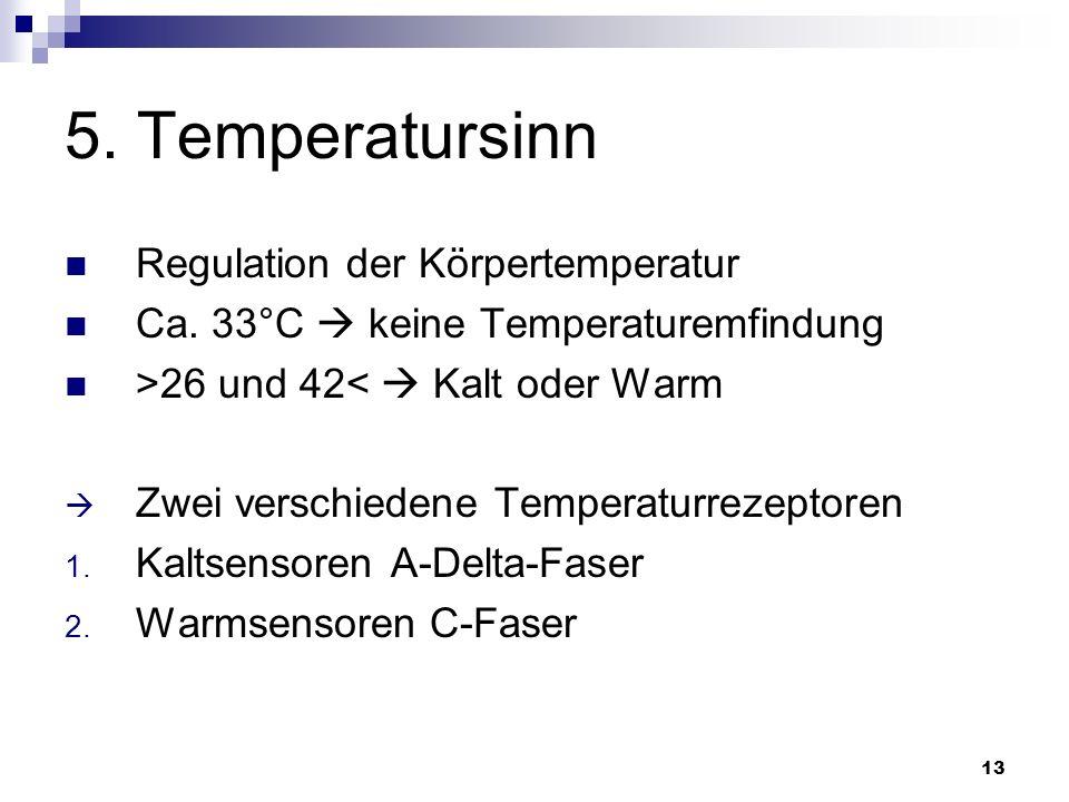 13 5. Temperatursinn Regulation der Körpertemperatur Ca. 33°C keine Temperaturemfindung >26 und 42< Kalt oder Warm Zwei verschiedene Temperaturrezepto
