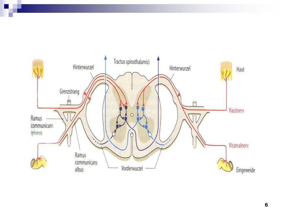 7 3.Schmerzrezeptoren Freie Nervenenden Reizung durch: 1.