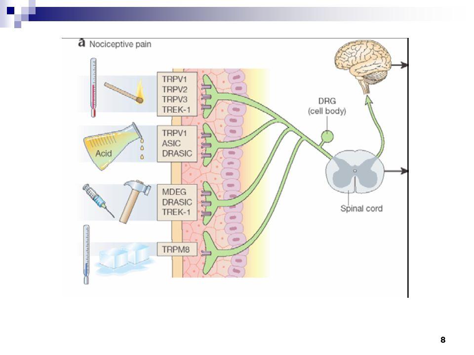 9 Schmerzrezeptoren Aufgeteilt in A-Delta-Fasern und C-Fasern A-Delta-FasernC-Fasern Schnell (120m/s)Langsam (2m/s) JungAlt Myelinscheide vorhanden Keine Myelinscheide vorhanden Schmerz leicht zu lokalisieren, da Primärer Schmerz Schmerz schwer zu lokalisieren da sekundäderer Schmerz