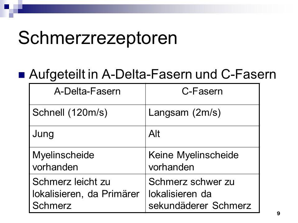 9 Schmerzrezeptoren Aufgeteilt in A-Delta-Fasern und C-Fasern A-Delta-FasernC-Fasern Schnell (120m/s)Langsam (2m/s) JungAlt Myelinscheide vorhanden Ke