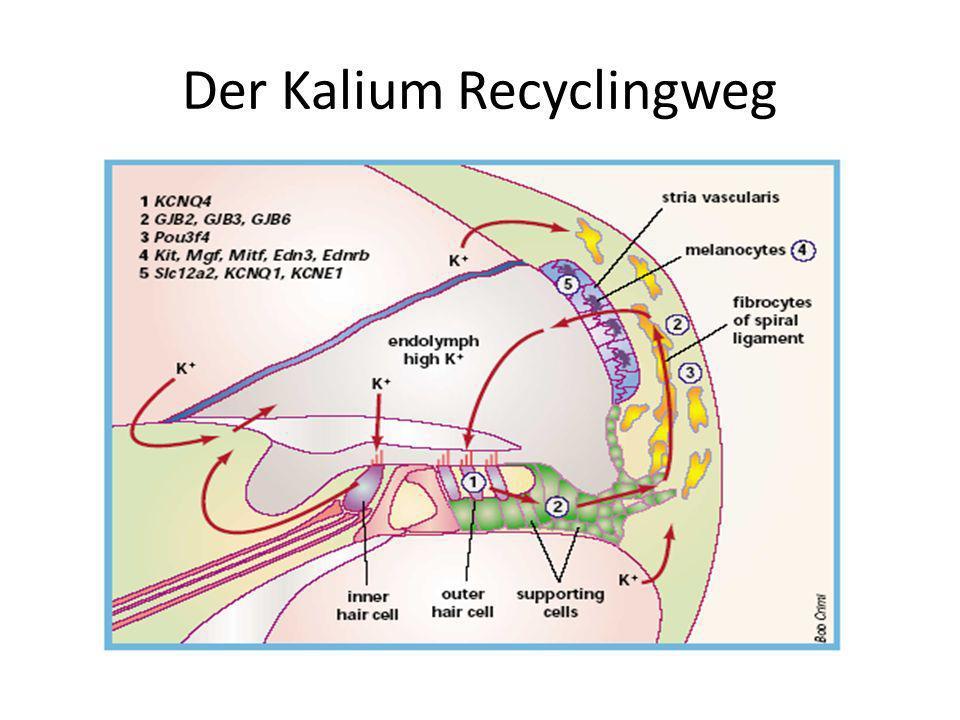 Der Kalium Recyclingweg