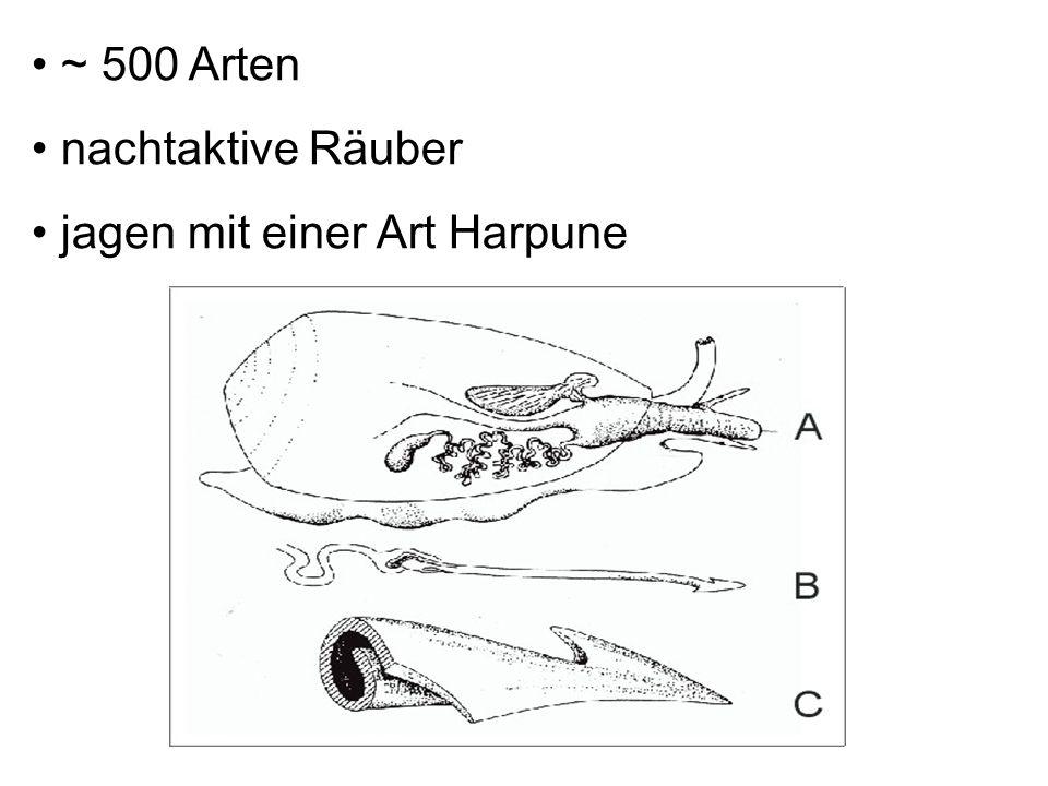 ~ 500 Arten nachtaktive Räuber jagen mit einer Art Harpune