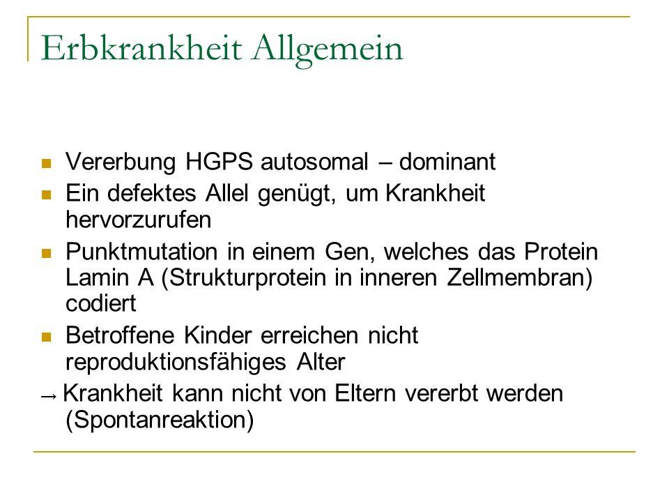 Erbkrankheit Allgemein Vererbung HGPS autosomal – dominant Ein defektes Allel genügt, um Krankheit hervorzurufen Punktmutation in einem Gen, welches d