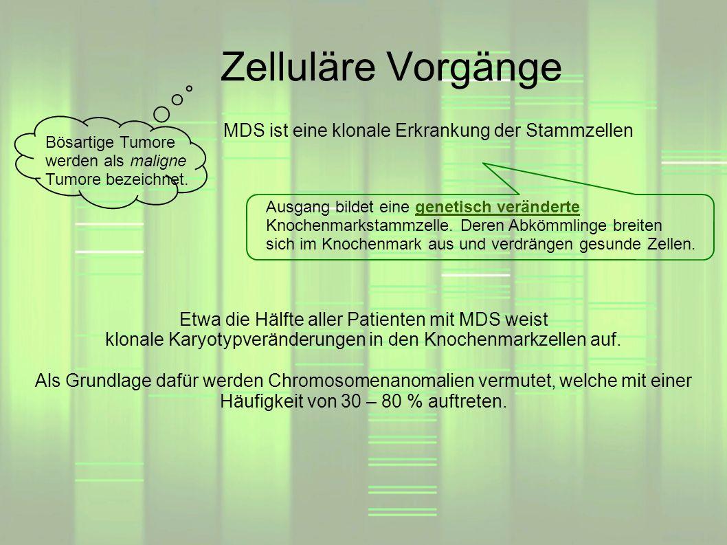 Zelluläre Vorgänge MDS ist eine klonale Erkrankung der Stammzellen Ausgang bildet eine genetisch veränderte Knochenmarkstammzelle. Deren Abkömmlinge b