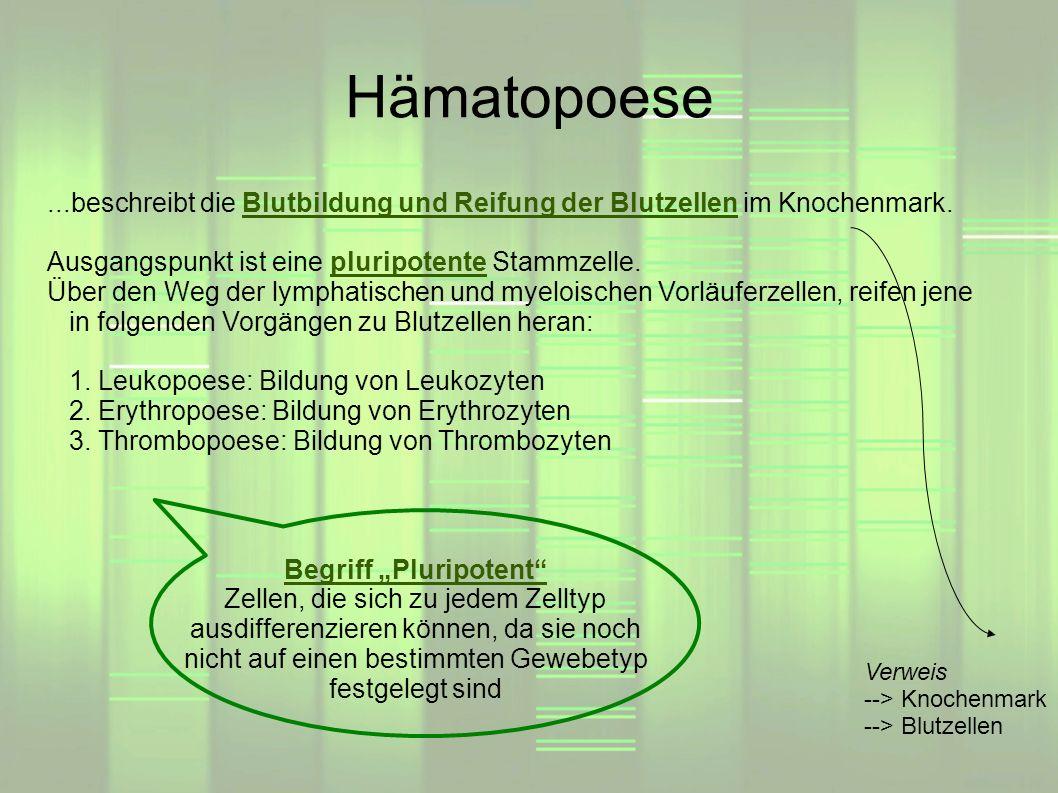 Hämatopoese Begriff Pluripotent Zellen, die sich zu jedem Zelltyp ausdifferenzieren können, da sie noch nicht auf einen bestimmten Gewebetyp festgeleg