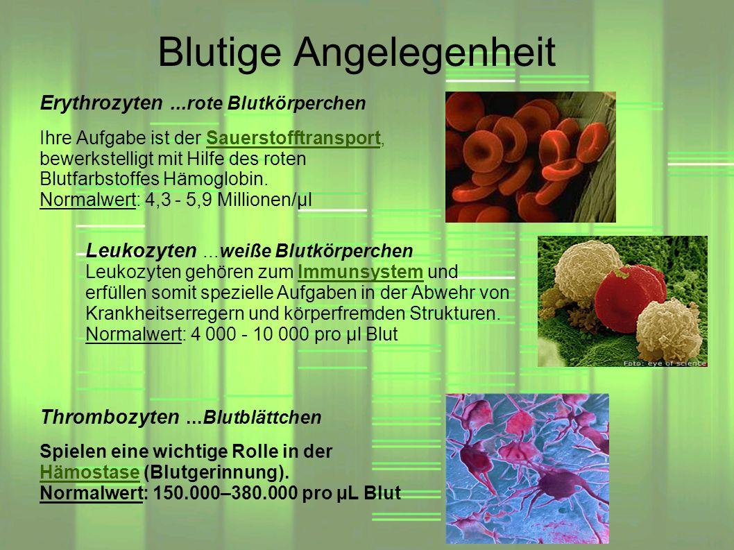 Blutige Angelegenheit Thrombozyten...Blutblättchen Spielen eine wichtige Rolle in der Hämostase (Blutgerinnung). Normalwert: 150.000–380.000 pro µL Bl