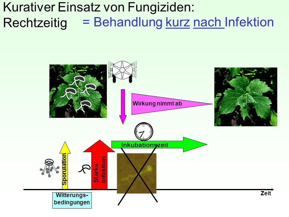 Kurativer Einsatz von Fungiziden: Rechtzeitig 12 3 6 9 Inkubationszeit Sporulation Starke Infektion Zeit Witterungs- bedingungen Wirkung nimmt ab = Be