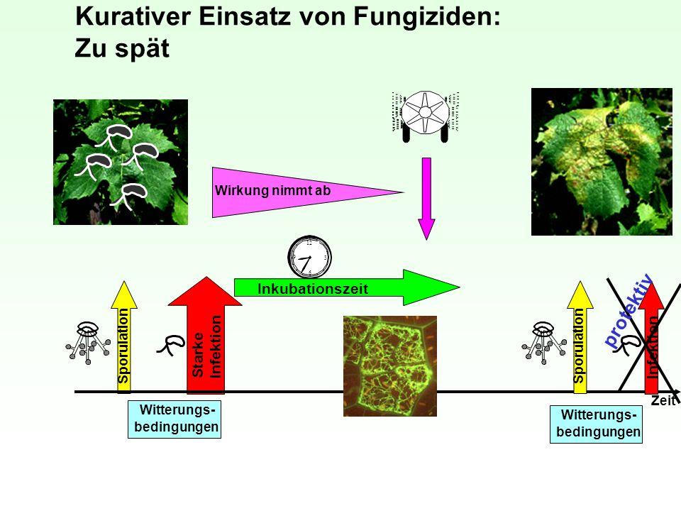 Kurativer Einsatz von Fungiziden: Zu spät 12 3 6 9 Inkubationszeit Sporulation Starke Infektion Zeit Witterungs- bedingungen Witterungs- bedingungen W