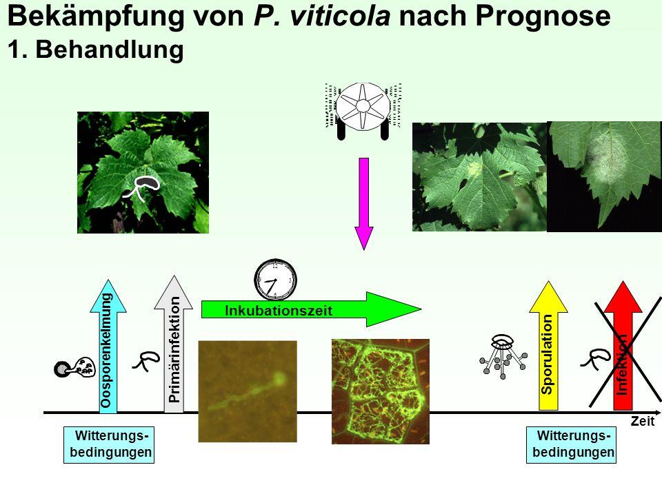 Bekämpfung von P. viticola nach Prognose 1. Behandlung 12 3 6 9 Inkubationszeit Sporulation Infektion Zeit Witterungs- bedingungen Witterungs- bedingu