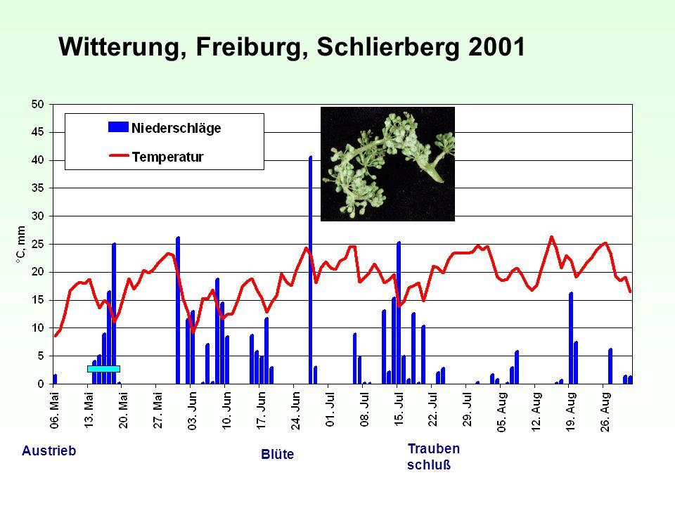 Witterung, Freiburg, Schlierberg 2001 Austrieb Blüte Trauben schluß