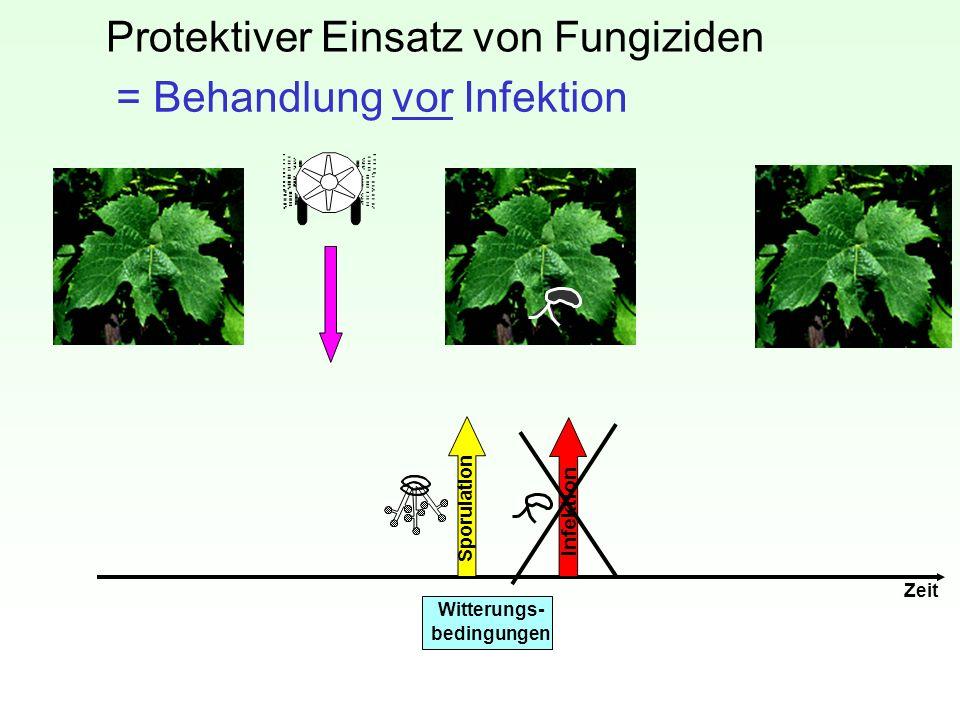 Protektiver Einsatz von Fungiziden Zeit Witterungs- bedingungen Sporulation Infektion = Behandlung vor Infektion