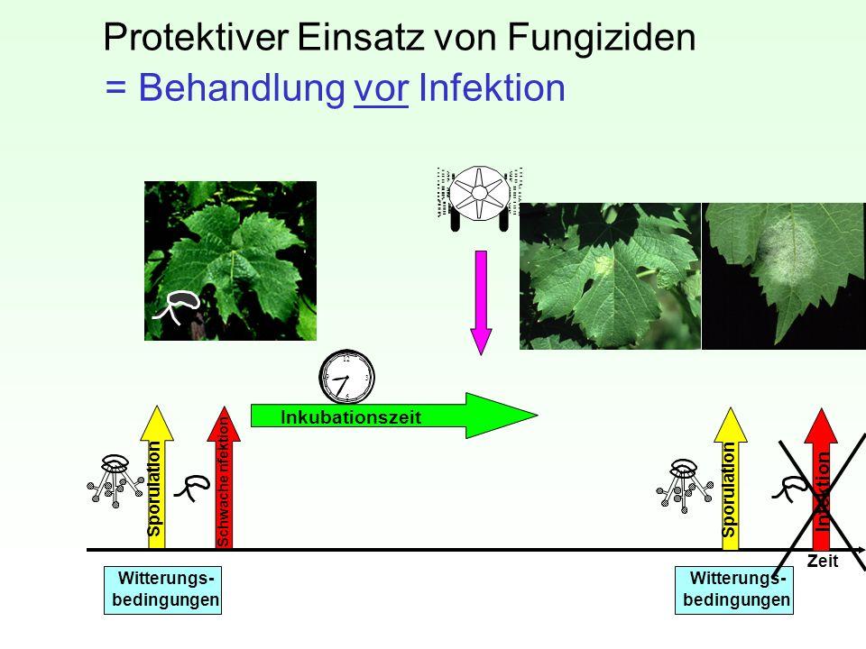 Protektiver Einsatz von Fungiziden Zeit Witterungs- bedingungen Witterungs- bedingungen Sporulation Schwache nfektion Sporulation Infektion 12 3 6 9 I