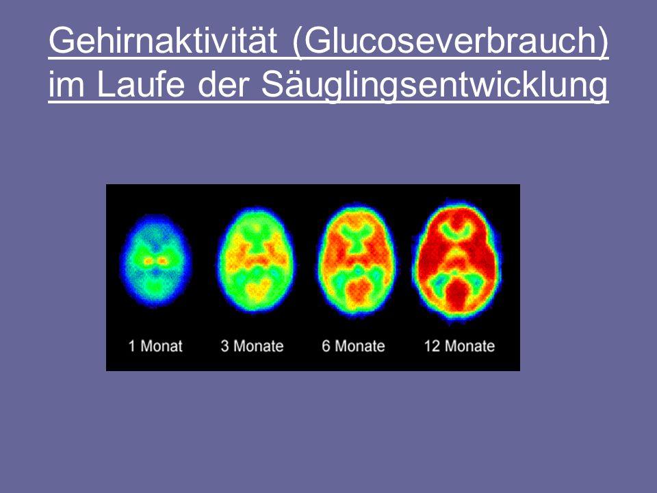 Gehirnaktivität (Glucoseverbrauch) im Laufe der Säuglingsentwicklung