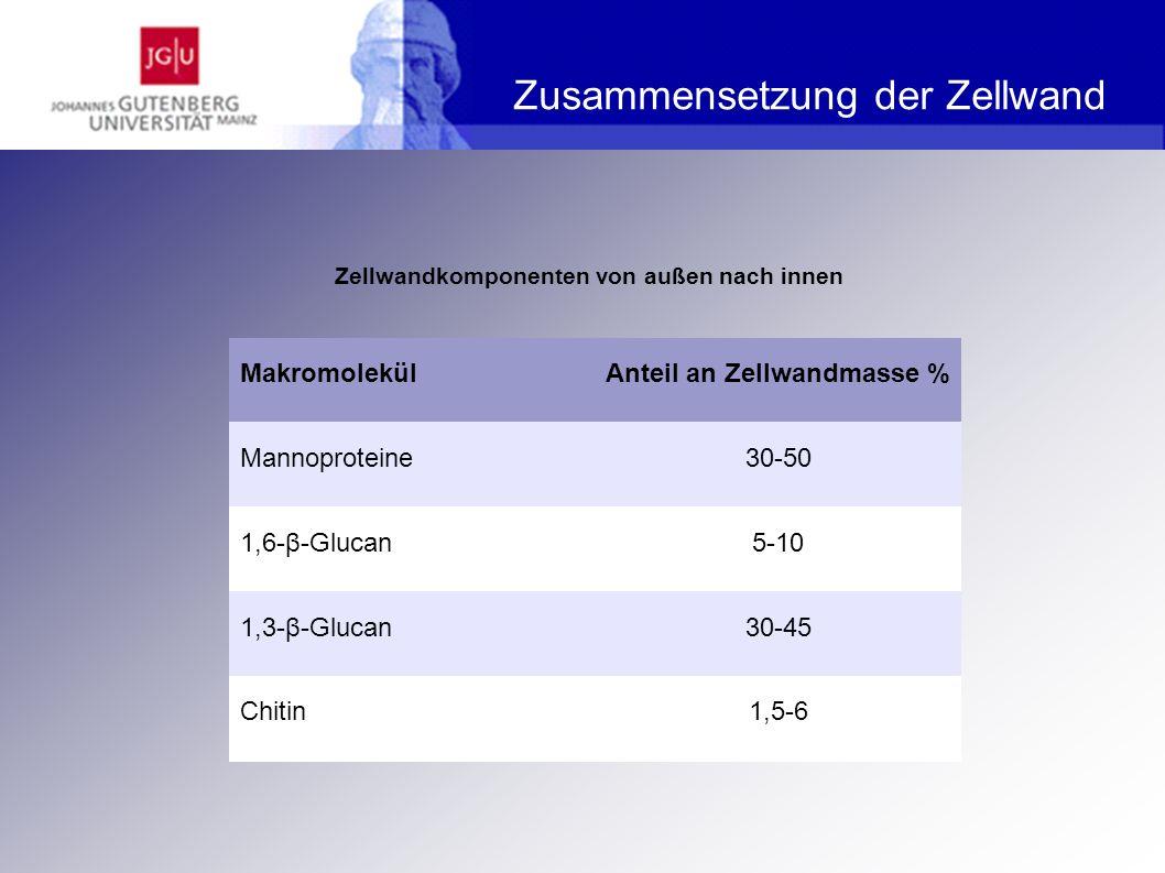 Aufbau der Zellwand - Mannoproteine Verankerung GPI-abhängige Mannoproteine in der Zellwand Jährig SC (2007) Bioaktivitäten von Wertstoffen aus Saccharomyces Hefen, Berlin, S.19.