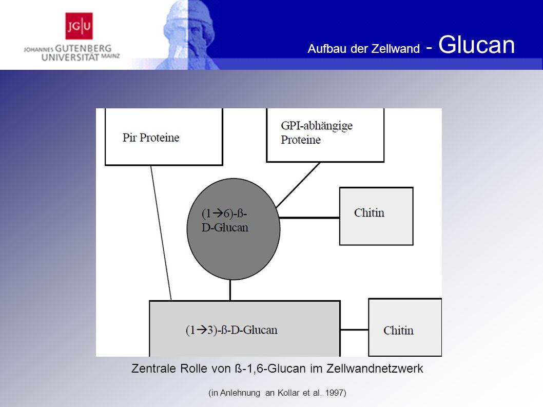 Literatur Klis FM et al.