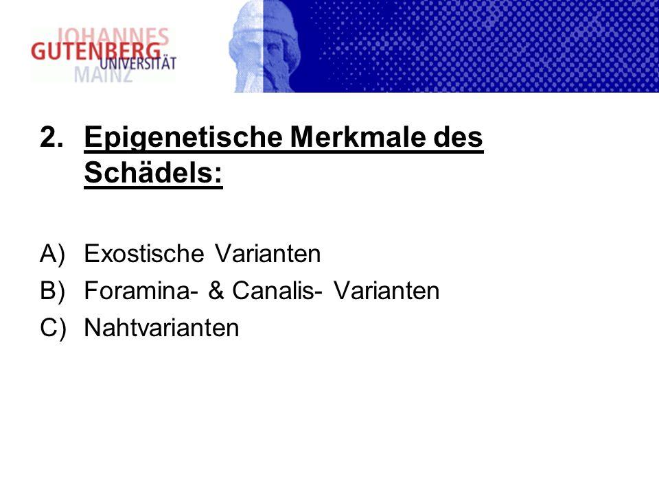 2.Epigenetische Merkmale des Schädels: A)Exostische Varianten B)Foramina- & Canalis- Varianten C)Nahtvarianten