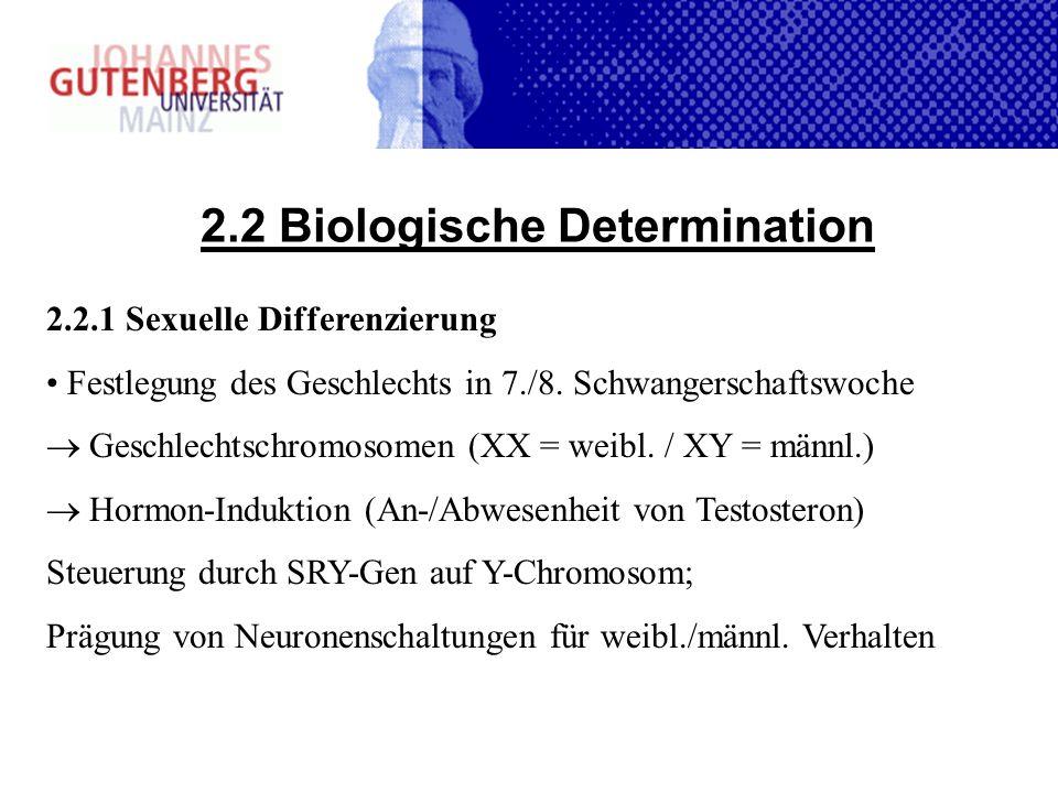 2.2 Biologische Determination 2.2.1 Sexuelle Differenzierung Festlegung des Geschlechts in 7./8. Schwangerschaftswoche Geschlechtschromosomen (XX = we