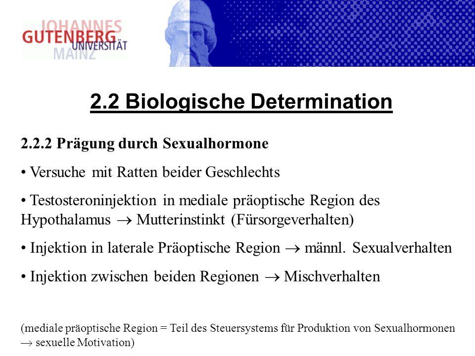 2.2 Biologische Determination 2.2.2 Prägung durch Sexualhormone Versuche mit Ratten beider Geschlechts Testosteroninjektion in mediale präoptische Reg