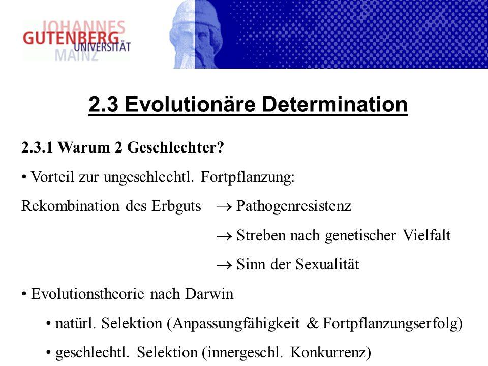 2.3 Evolutionäre Determination 2.3.1 Warum 2 Geschlechter? Vorteil zur ungeschlechtl. Fortpflanzung: Rekombination des Erbguts Pathogenresistenz Streb